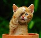 Kitten_pot_facepalm
