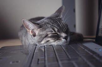 cat_asleep_at_keyboard