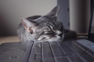 cat_asleep_at_keyboard